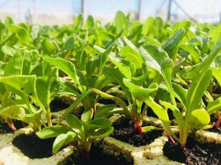 nursery-seedling-2