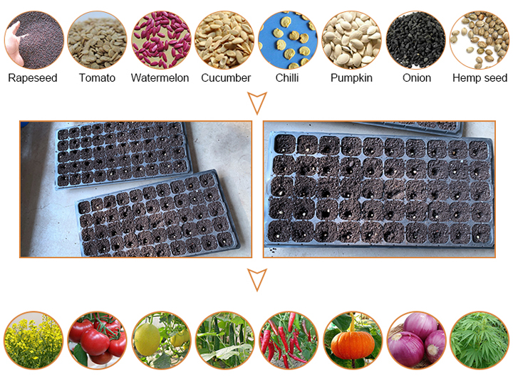 Vegetable Seedling and Planting