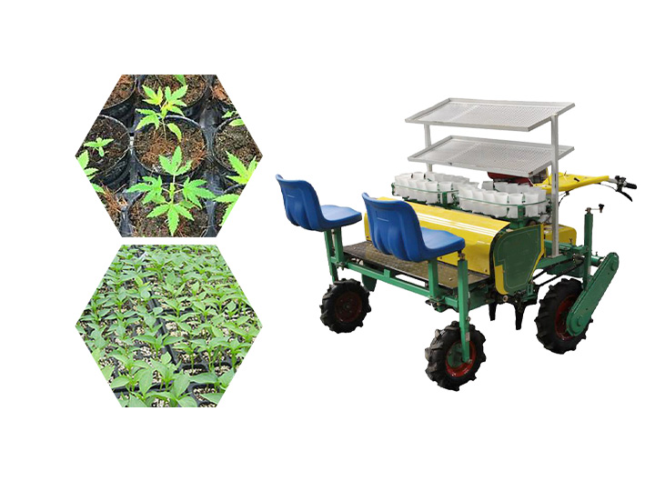 tobacco transplanter