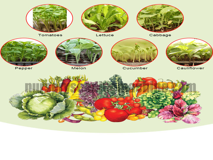 Application-of-nursery-seeding-machine