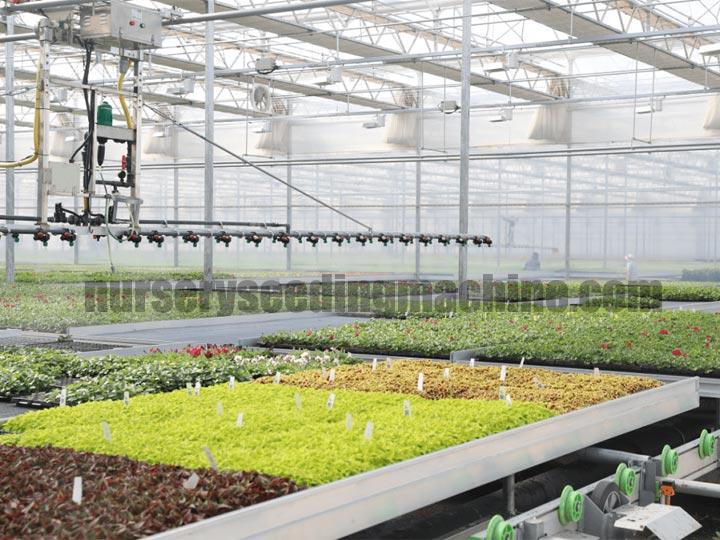 flower-seedling